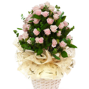 꽃행복핑크1호